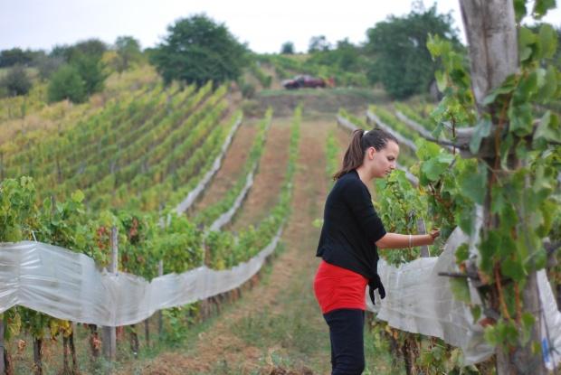 Zsirai Hungarian wines